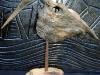 oiseau-perce