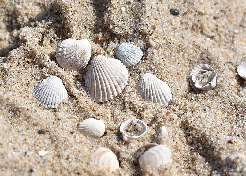 7794167966_des-coquillages-sur-du-sable-fin-illustration