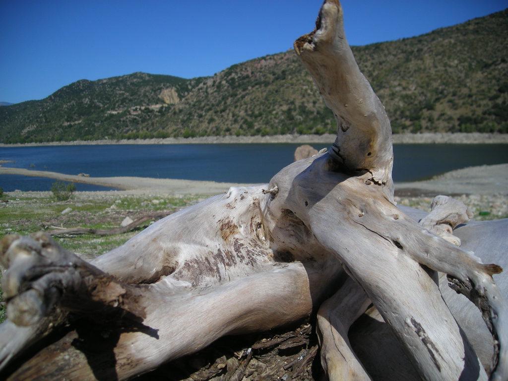 Réponses aux questions techniques et astuces sur le bois flotté